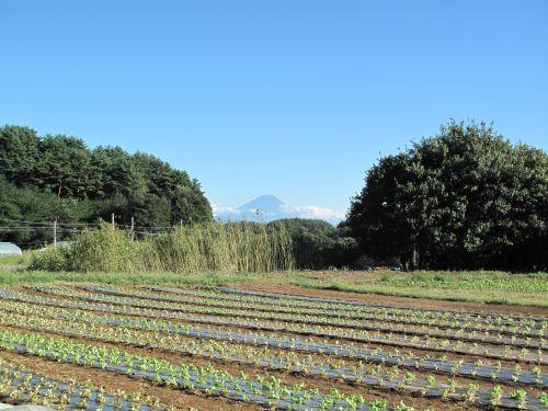 三峰の丘富士山