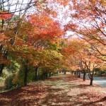 もみじ湖(箕輪ダム)の紅葉