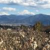 富士山と満開の梅の花
