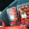 須玉のおいしい市場の渡辺聖治さんの苺