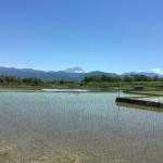 田んぼの逆さ富士と畑の富士山