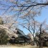 鎧観音堂の桜2017