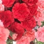 母の日に今年も花を贈れるのは幸せなこと