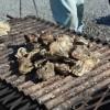 本場の牡蠣をふるさと納税でゲット