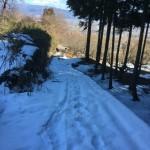 散歩道の雪