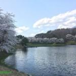 北杜市長坂町 みどり湖の桜2018
