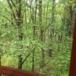 窓の外の新緑