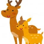 レインボーラインで鹿と遭遇