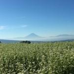 蕎麦畑と富士山
