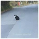 道の真中で動かない猫