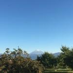 柿の木の向こうの富士山