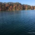 松原湖の紅葉も終盤