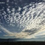 今朝のうろこ雲