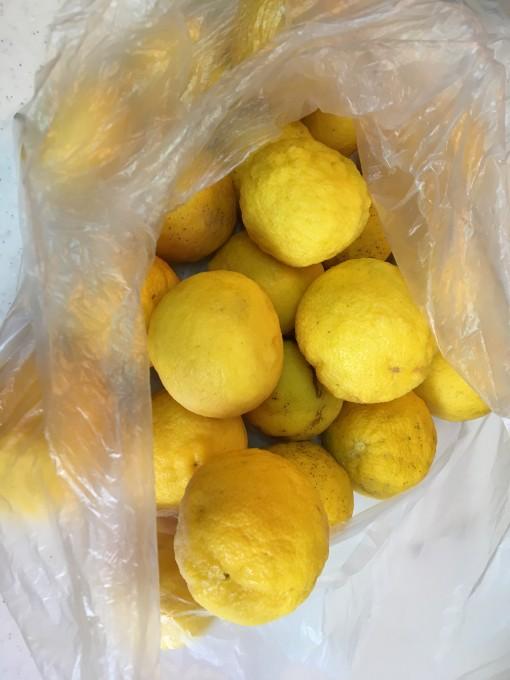 柚子の絞り汁を冷凍