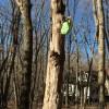 木に吊るされたクロックス