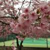 お花見テニス&バーベキュー&温泉@八田樹園
