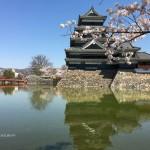 松本城は今桜が満開