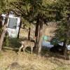 鹿さんのお散歩