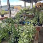 パノラマ市場だいぶお花と苗が増えてきた
