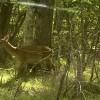 鹿に逢った