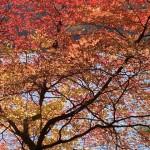 白駒池2020/10/13の紅葉の様子