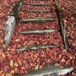 今年の紅葉は赤が綺麗だね