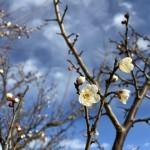 梅が咲いたよ