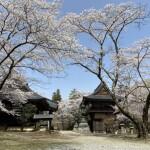 鎧堂観音の桜 2021年3月30日