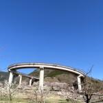 ループ橋(桃花橋)の桜が見ごろ