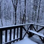 朝起きたらこの雪