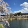 みどり湖の桜4月7日